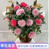 五色赤丹树苗带花苞盆栽四季开花一花多色名贵庭院花卉白底山茶花